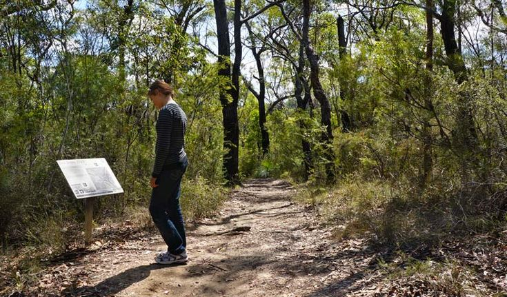 Jack Evans Track, Blue Mountains National Park. Photo: Steve Alton/NSW Government