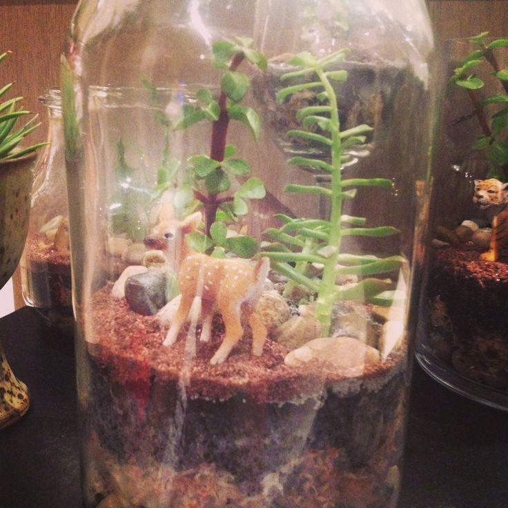 My latest open terrarium....visit my Facebook page @beyondtheglassterrariums