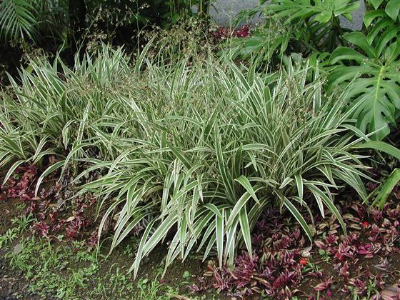 Shade Tolerant Plants Texas