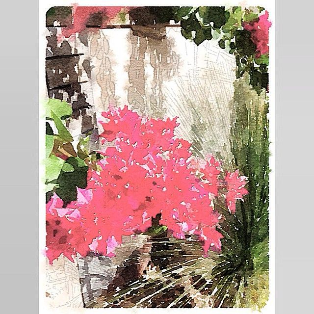 """Painted in #Waterlogue #Waterlogueapp #watercolour #art #picoftheday #beauty #flora #featureuniverse #Australia #byronbay #lovewaterlogueapp"" Photo taken by @glendapix on Instagram, pinned via the InstaPin iOS App! http://www.instapinapp.com (04/14/2015)"