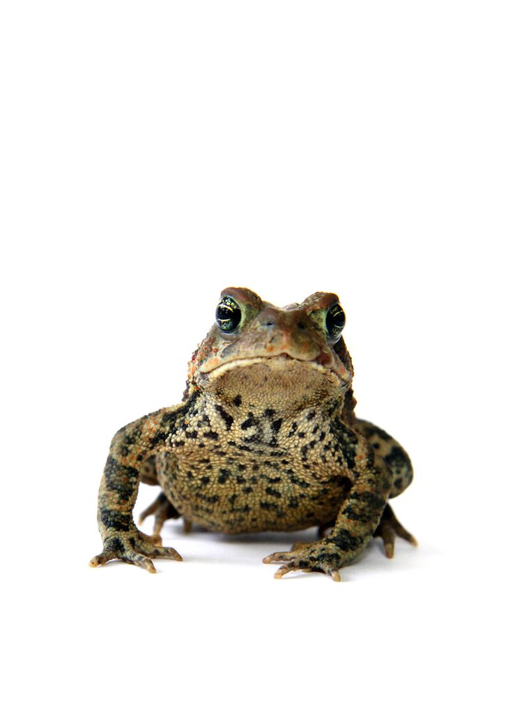 toad  (mary jo hoffman)