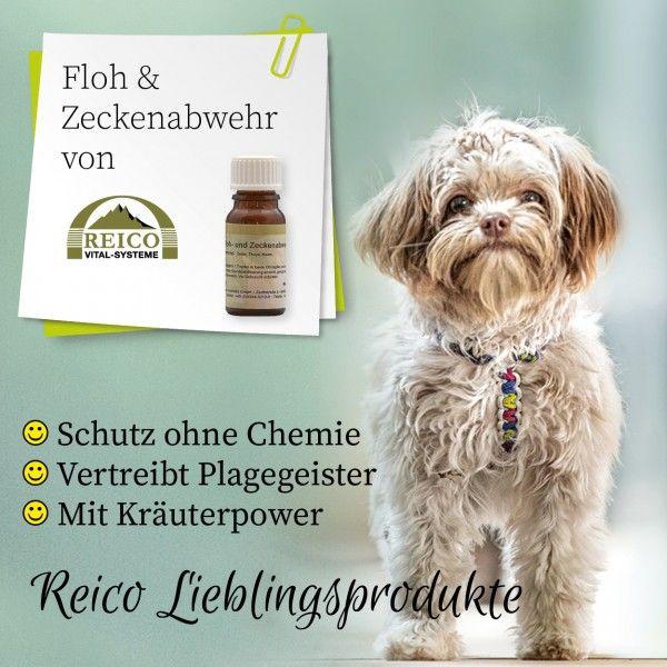 Schutze Deinen Liebling Naturlich Ohne Chemie Hundefutter Hunde Futter Hunde