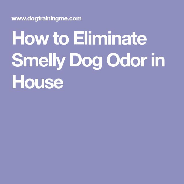 Best 25+ Eliminate House Odors Ideas On Pinterest | Belly Bands For Dogs,  Male Cat Spraying And Remove Dog Urine Smell