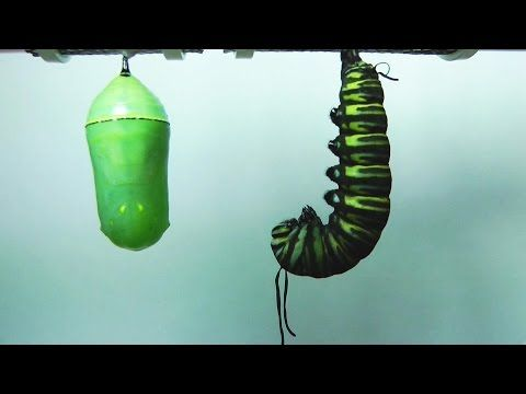 They Film 2 Bright Green ''Pupa,'' Now Watch The One On The Right. I Have NO Words...