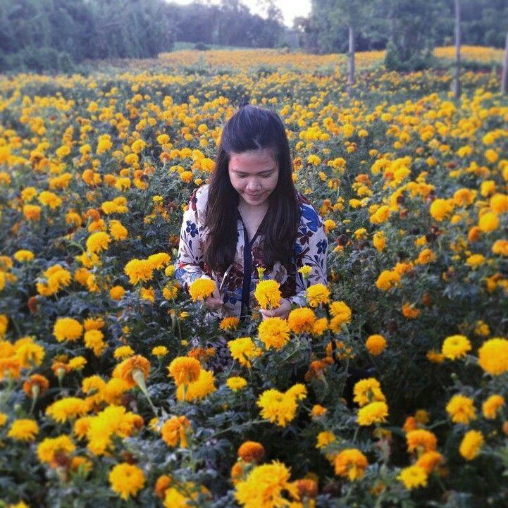 Tomohon flower city
