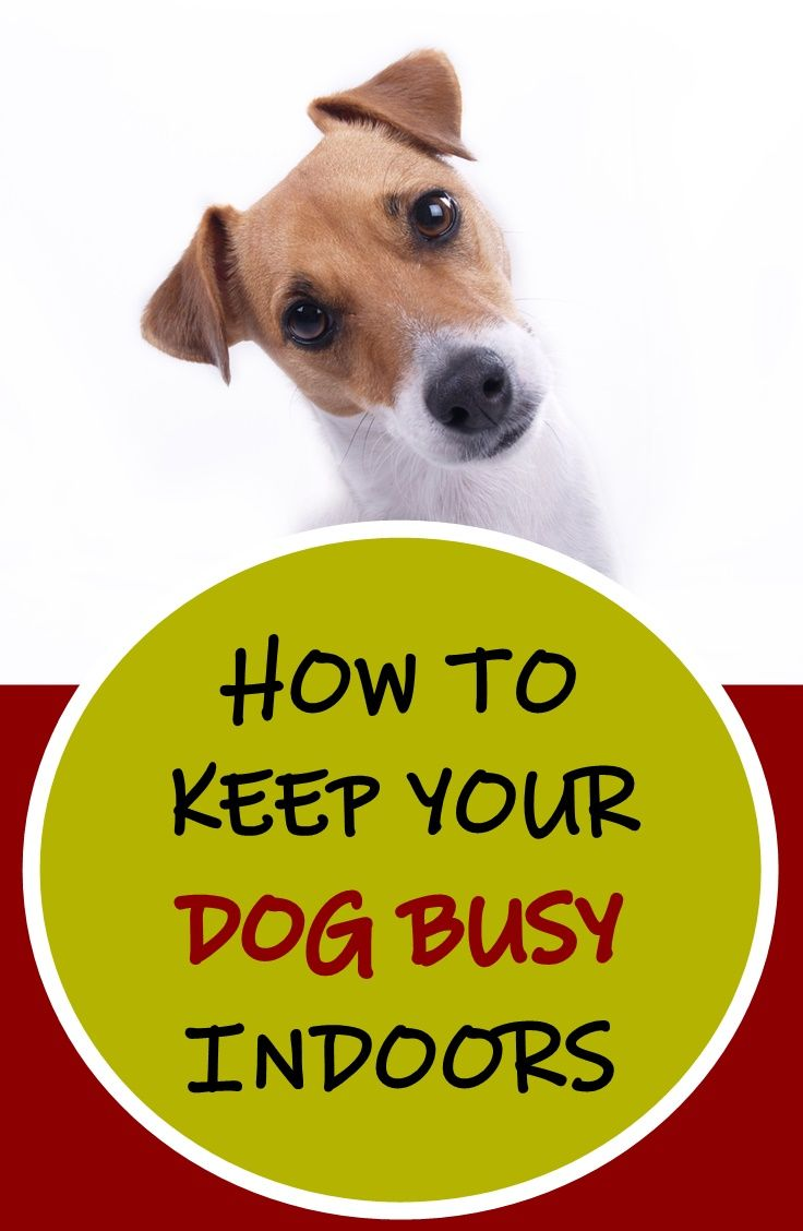 How To Keep Your Dog Busy Indoors In 2020 Best Dog Toys Dog Boredom Dog Boredom Buster