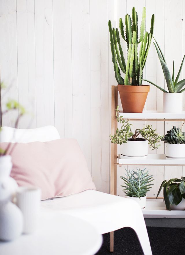 Love the idea of potted succulents on a shelf like this. Could work well in a garden to cover a bland wall or just add visual interest
