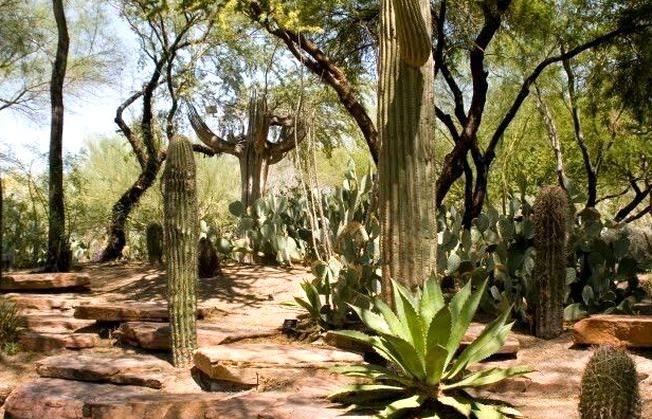 93cb1c381d60e715b1458a9b4e60b325 - Botanical Cactus Gardens Las Vegas Nv