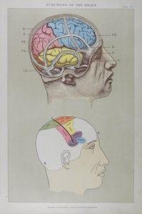 Functions of the Brain | Sanders of Oxford