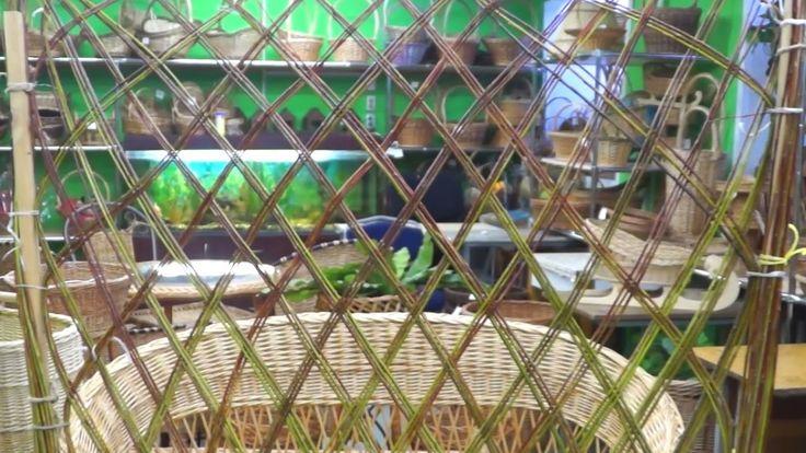 Как сделать живую изгородь из ивы?