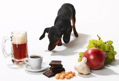 Dog training DIY: Poisonous foods for your dogs.