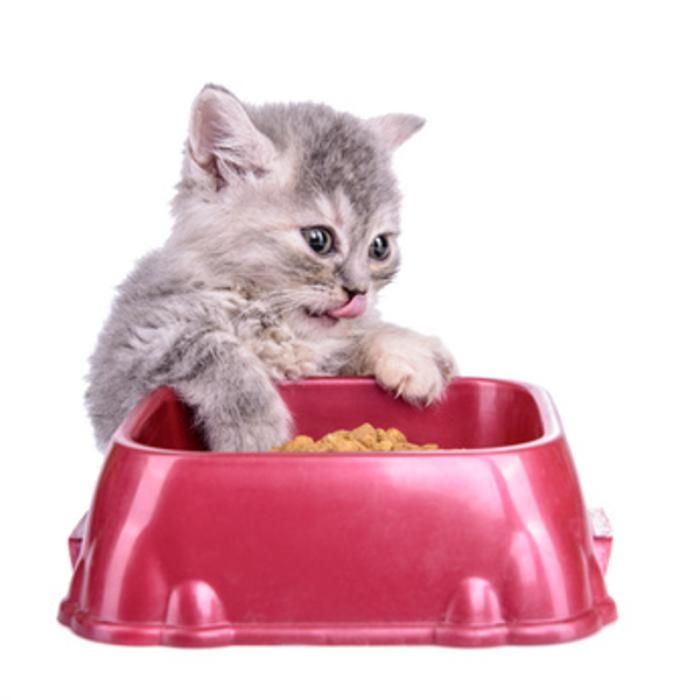 Latest scientific discovery: cats eat more in the winter. Cat owners take note -- your feline craves more food when it's cold!