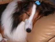 A checklist for canine cognitive dysfunction