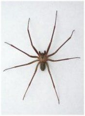 BROWN RECLUSE First Aid Kit..  Every Family Needs One of these!!!