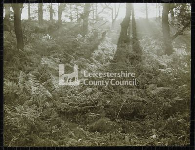 LS1236 - Bardon Hill, trees and bracken
