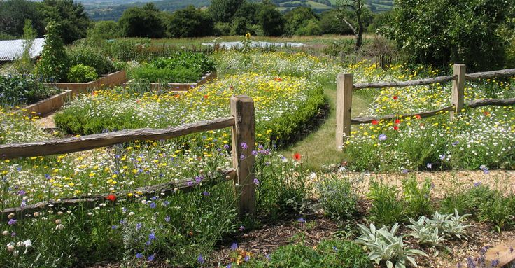 Rural garden design - Dorset