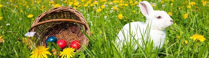 Ostern im Harz genießen. Sehen Sie auch das traditionelle Osterfeuer im Harz. Buchen Sie jetzt Ihren Osterurlaub im Harz!   Jagdschloss-Walkenried