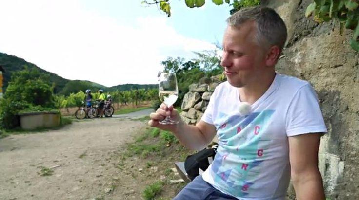 Nejstarší vinice Šobes uprostřed Národního parku Podyjí