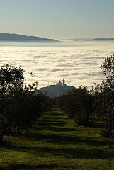 Un mare di....nebbia!  www.oliotrevi.it