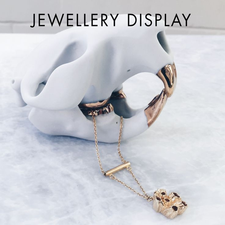 Jewellery Display | Love this white beaver skull with dipped gold teeth that doubles up as an interesting necklace holder. The brilliant gold necklace really pops and contrasts nicely against the gold teeth. | Curiosities | Curios | Memento Mori