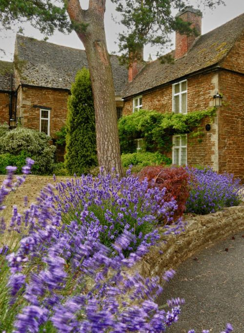 Lavender on display in Oakham, the county town of Rutland, England. Rutland is the smallest historic county in England and lies south east of Leicestershire, kind of in the middle of the country. The only towns in Rutland are Oakham and Uppington...