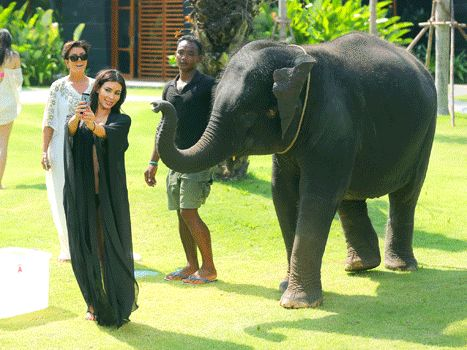 Even the elephant had enough of her narcissism. Kim Kardashian Attacked By Elephant While Taking Selfie: Hilarious GIF - Us Weekly