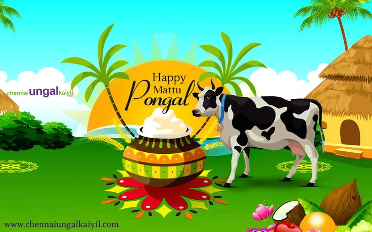 Wishing that this festival brings good luck and prosperity and hoping that it is joyous, and fills your days ahead with happiness. #ChennaiUngalKaiyil Wishes Have a Wonderful Mattu Pongal!!!! #HappyMattuPongal #MattuPongal #MattuPongal2018
