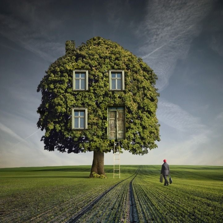 By Cecily Mak   The art and magic of living in and among trees