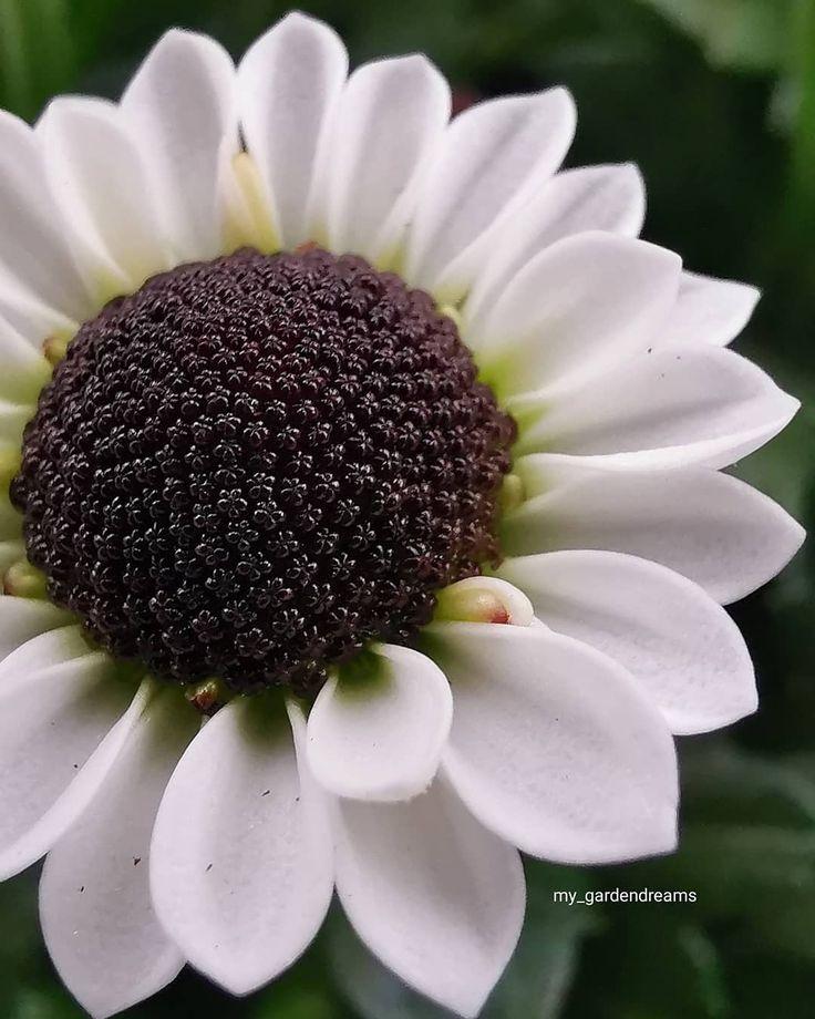 Gute Nacht ihr Lieben erholt euch gut  . . #fotografie_ist_unser_hobby #blooming_macro #makro #macro