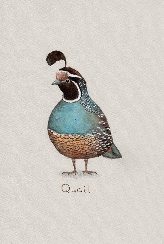 Quail Art Print from an original watercolour painting by Irene Owens