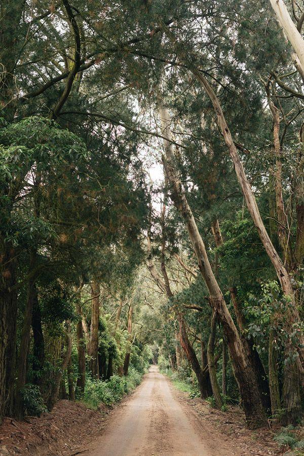 Merricks_Trees