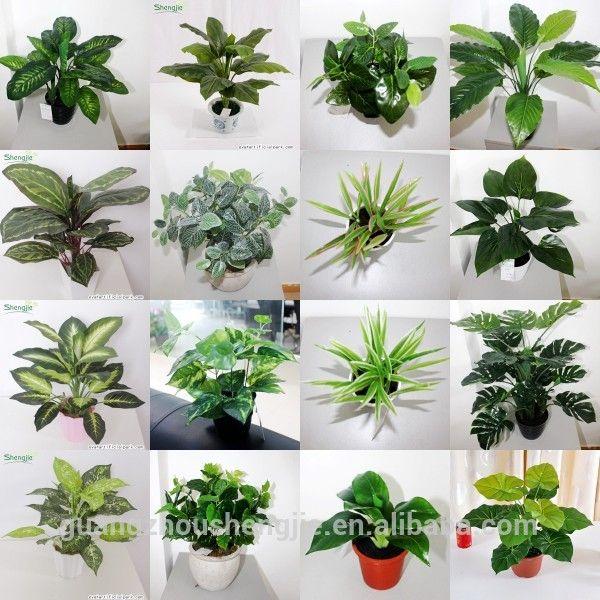Plantas ornamentais para jardim, Plantas de sombra e Plantas