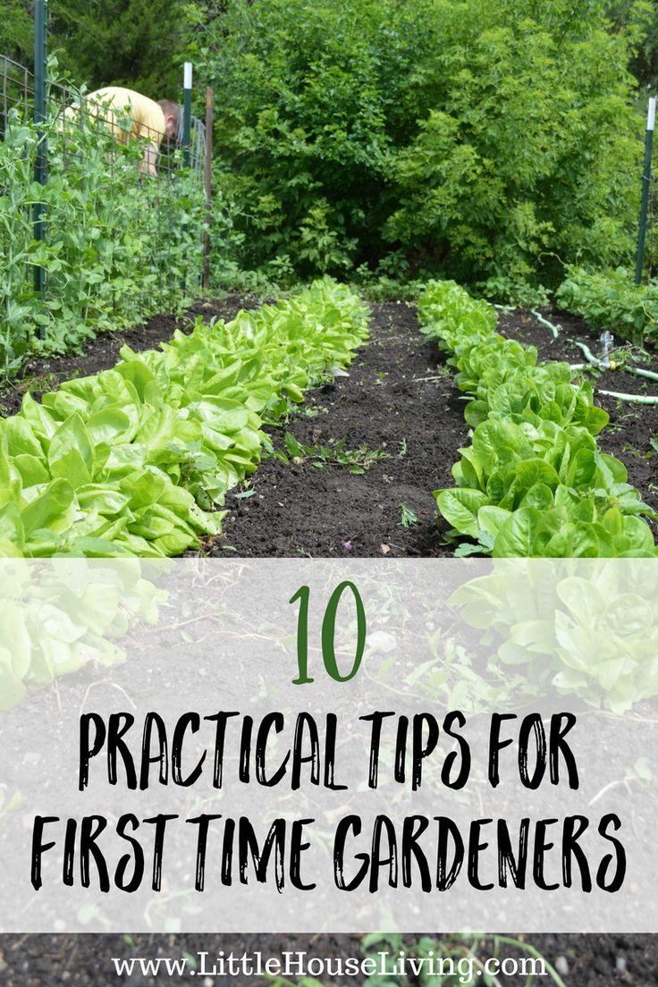 371 best garden: tips & techniques images on pinterest   gardening, Gartenarbeit ideen