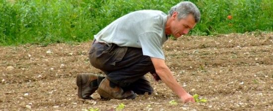 planting by hand at Northdown Orchard