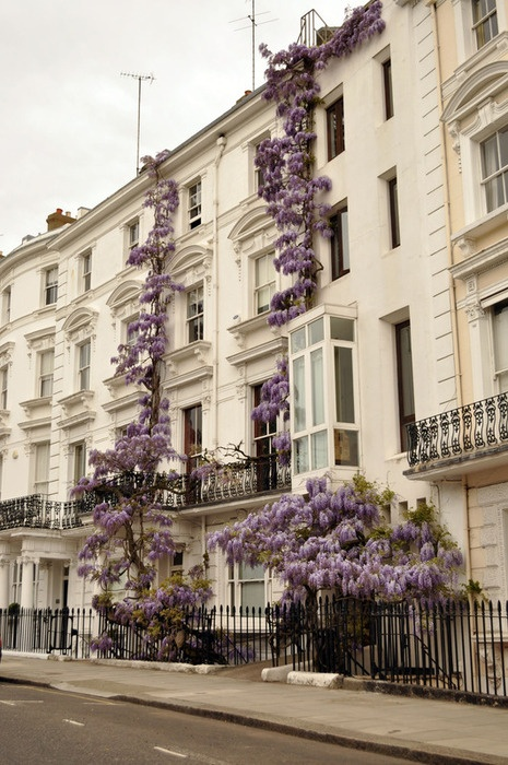 Purple flower vine up side of building.