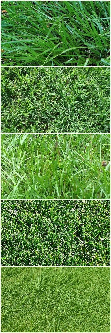 How to Choose the Right Lawn Grasses Flowers, Plants & Planters Garden Decor