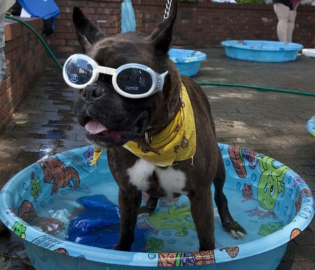 A kiddie pool is cheap, loads of fun and protects dogs from the summer heat.