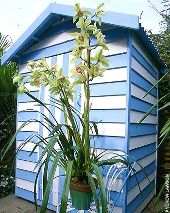 Blue and white painted shed looks like a beach hut.