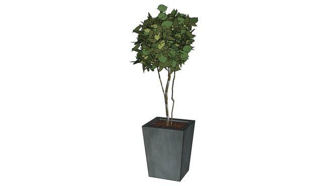 Plante stabilisée Hêtre vert 180 cm de haut HVAR180 - 3D Warehouse