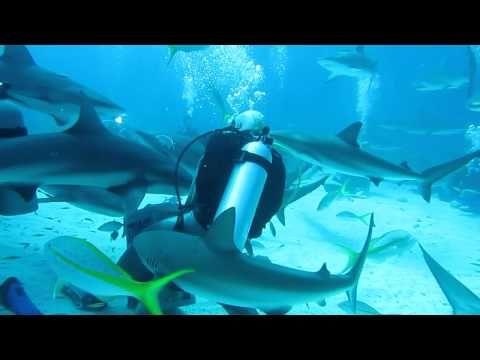 Mergulho na grande barreira de corais (Austrália) - YouTube