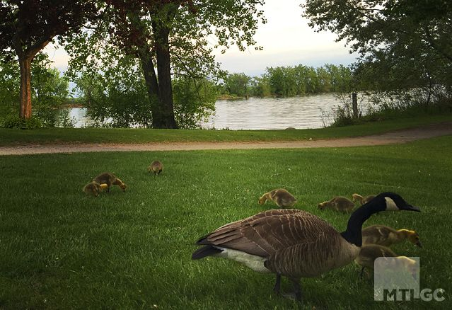 Un refuge d'oiseaux migrateurs au Parc des Rapides.