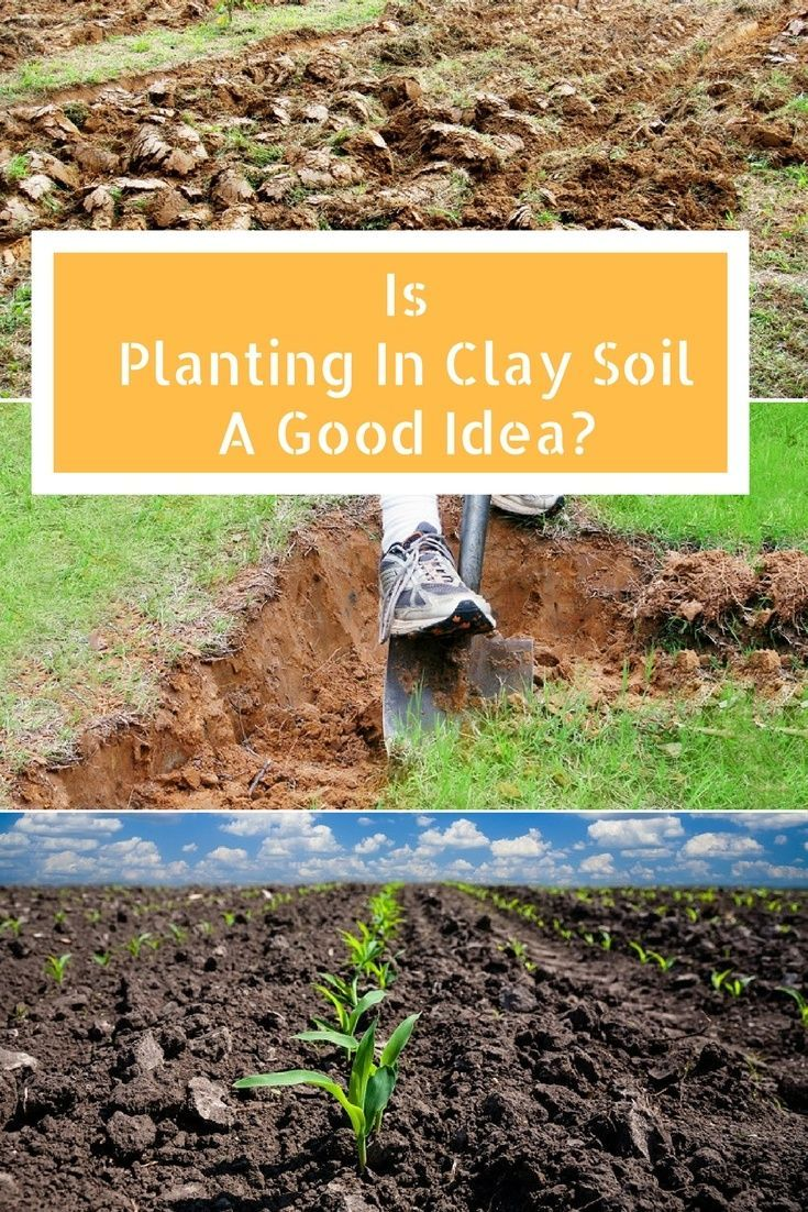 Is Planting In Clay Soil A Good Idea Planting In Clay Plants Clay Soil