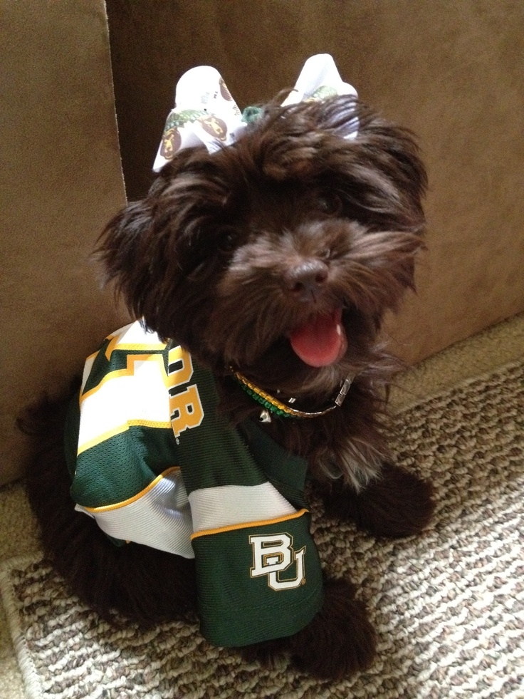 Izzy dressed for the #Baylor game.