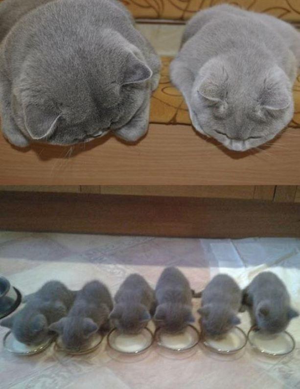 OMG! Cuteness heaven !!