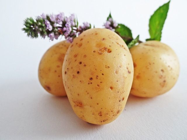 multiplication de patates