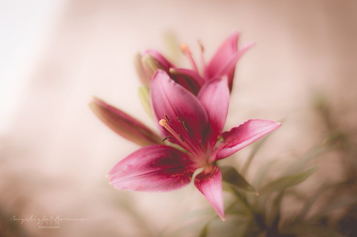 Lily - I took this on a beautiful morning, and loved the colours and the way it came out (didn't do much post processing). It almost reminds me of a painting.