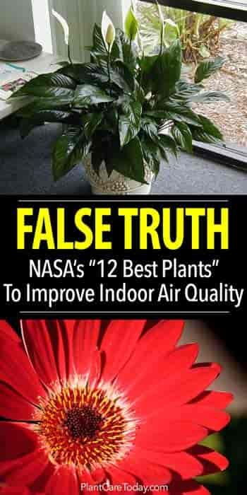 "The FALSE TRUTH - Did the NASA ""Clean Air Study"" recommend 12 houseplants as the BEST for improving indoor air quality? Or is this ""Stretching the Truth""?"