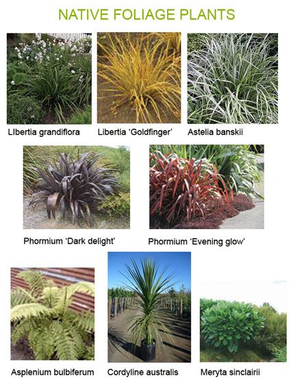 Native foliage plants plants*.jpg