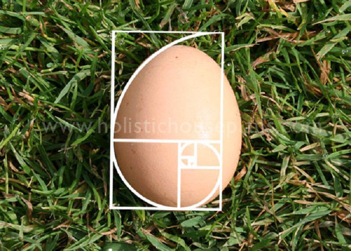 Divine Symmetry of the Golden Proportion in The Egg