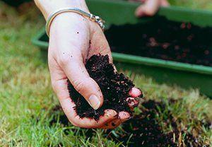 6 tips til grønnere gressplen